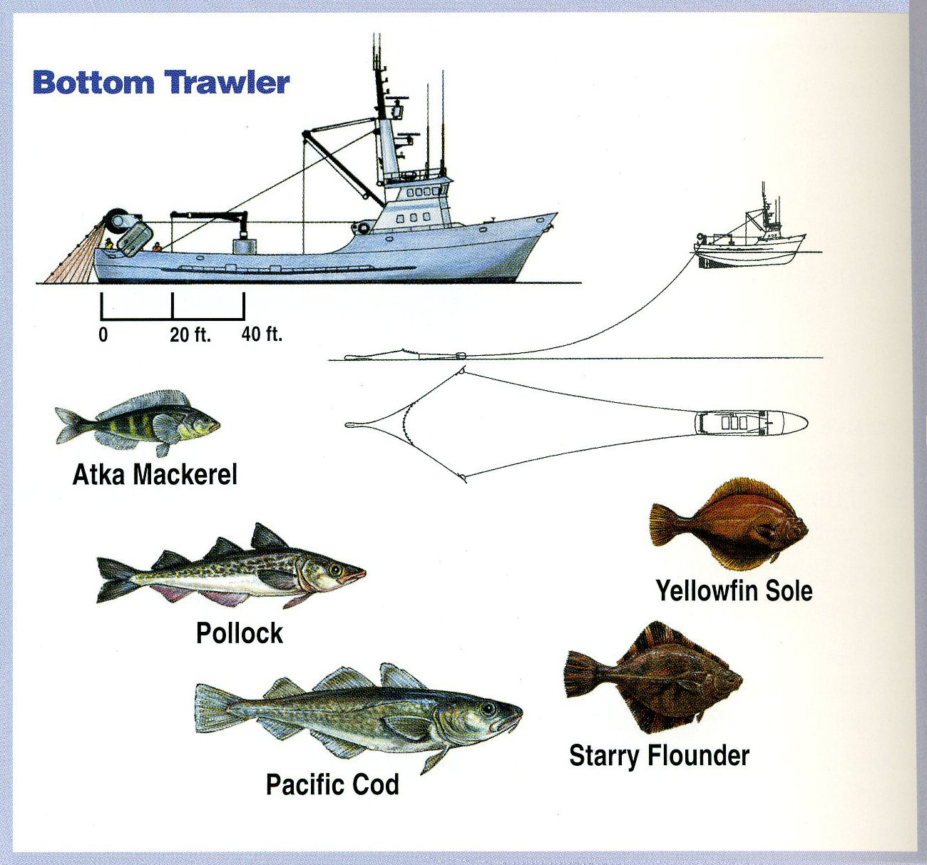 Background information about the alaska seafood for Alaska fish species